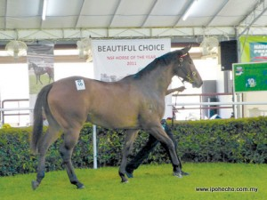 ipoh echo issue 139, thoroughbred horse auction,  National Stud Farm, Tanjung Rambutan